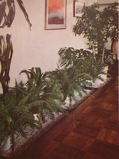 Not quite the same, but we could put low-light plants along the hallway wall in the living room.