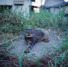 """* * """" Me chronicled de lives of de Donner Party cats ands allz it did wuz depress me."""""""