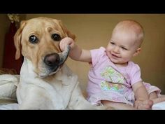 Babies Laughing Hysterically at Dogs Compilation 2014 - https://plus.google.com/107327154036207461770/posts/ReBLKJ9QUsZ