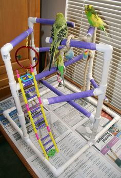 Bird Play Gym- Need to hook my boy up with this