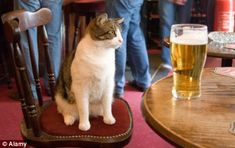 Just say no: Owners who suspect that their cat suffers from the newly discovered condition are adviced to ban them from begging at the dinner table