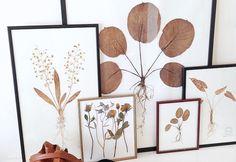 DIY | Gedroogde bloemen in een lijst - Wonen&Co