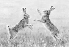 © Nolon Stacey 'Boxing Hares II' Original Drawing