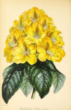 v.9 (1842) - Paxton's magazine of botany, - Biodiversity Heritage Library