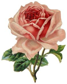 """free printable paper tole roses 