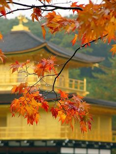 Kinkaku-ji, Kyoto... I've been here, but want to go back during fall just because it's so pretty!