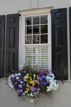 <3 window boxes