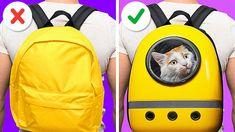 Funny Hacks, Funny Tips, Kitten Toys, Kitten Gif, Cat House Diy, Cat Ages, Diy Cat Toys, Pet Peeves, Mundo Animal