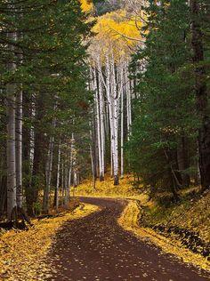 Autumn Road near Flagstaff, Arizona