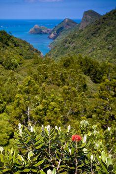 Whatipu -Waitakere Ranges, West Auckland, North Island, New Zealand