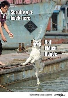 Awe the adorable dog an wanting to dance...sums me up!
