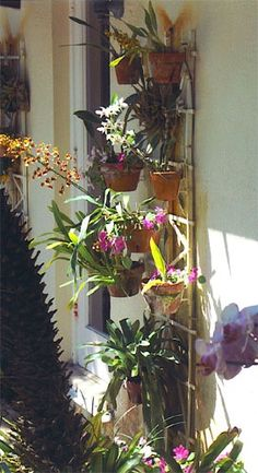 Orchids on wall