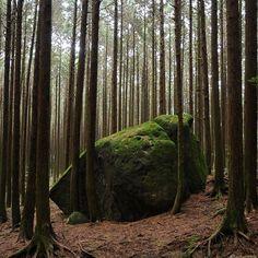 【kazu_honnda】さんのInstagramをピンしています。 《山頂への道すがら 2017/1/9 #雲仙 #雲仙岳 #高岩山 #山 #登山 #山登り #岩 #森 #unzen #mtunzen #mountain #mountains #hiking #trekking #walking #climbing #mountainclimbing #rock #forest #trees》