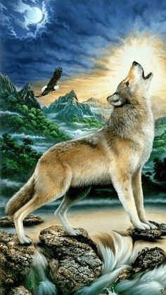 INSTINTO ANIMAL LOBOS – Сообщество – Google+