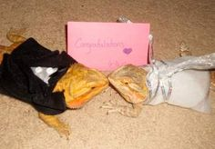 I will take a picture of my bearded dragons in a handmade bridal gown and groom's tux