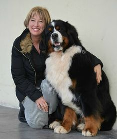 Most current No Cost bernese mountain dogs and baby Style For over decades, your Bernese Huge batch Doggy is a huge basis with town lifetime with Switzerland. Cute Dogs Breeds, Cat Breeds, Big Dogs, I Love Dogs, Chien Mira, Cute Puppies, Dogs And Puppies, Doggies, Puppies Tips
