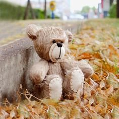 falling in love with teddy