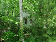 One of many hidden cabins/cottages near Wonderland Hotel