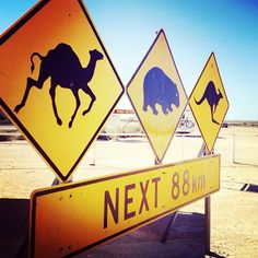 Where else in the world will you have to watch for camels, wombats and kangaroos - all on the same route?