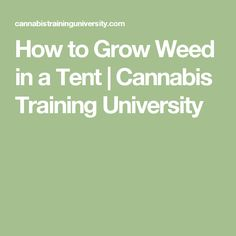 How to Grow Weed in a Tent | Cannabis Training University