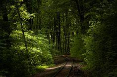 Törő Balázs: az erdő mélyén / deep in the forest Lillafüred, Bükk Mountains, Hungary, 2010
