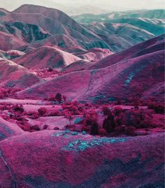 Happenings: Richard Mosse, The Enclave | richard mosse, the photographers gallery, the enclave | Glasshouse Journal