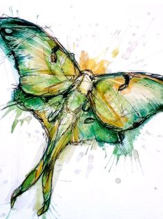 Luna Moth by Abby Diamond Lunar Moth Tattoo, Aquarell Tattoo, Insect Art, Diamond Art, Butterfly Art, Ink Painting, Illustration Art, Book Illustrations, Art Prints