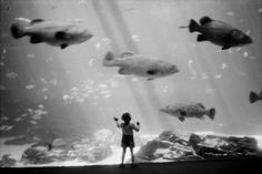 Josef Koudelka, Aquarium, 2008