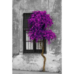 Tree in Front of Window Canvas Giclee Print