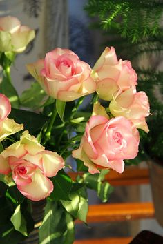 Koti kolmelle - Sisustusblogi #kotikolmelle #flowers #roses