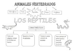 *MIS COSAS DE MAESTRA*: Animales Vertebrados: Esquemas Vertebrates, Biology, Montessori, Science For Kids, Science And Nature, Animal Projects, Projects For Kids, School Items, First Grade