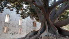 Viaggio Sicilia Autentica - Viaggi, Vacanze e Tour Sicilia   Boscolo