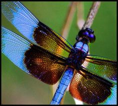 Dragonflies things-i-love