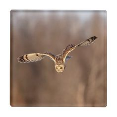 Short-eared owl diving towards the ground glass coaster - animal gift ideas animals and pets diy customize