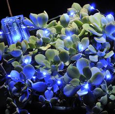 20 Teeny Blue LED Lights 4' Waterproof Battery Operated $5.99 each / 3 for $5 each