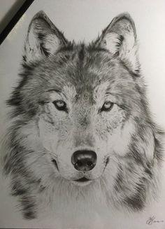 My first wolf by THEREDBLACKFOX