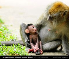 How many other animals make eye contact with their young?