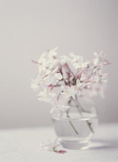Best Jasmine Fragrances for Summer: Which made the cut?  Find out on Fragrance.About.com