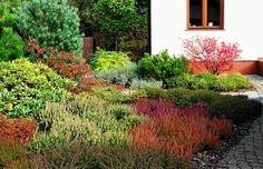 WRZOSOWISKO jest dominującym elementem wejściowej części ogrodu.