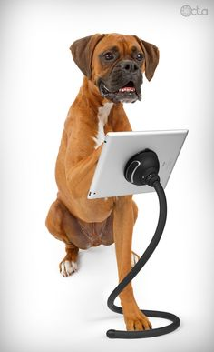 Dog with an iPad and a TabletTail: Monkey Kit