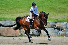"""backhomeinbromont: """"A Good Ride Captured at the Bromont International, Quebec. Woman Riding Horse, Horse Riding Tips, Andalusian Horse, Friesian Horse, Arabian Horses, Horse Photos, Horse Pictures, Dressage, Cute Ponies"""