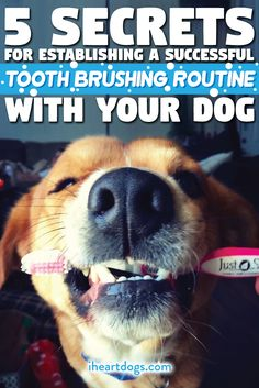 Keeping those teeth pearly white doesn't have to be a pain!!