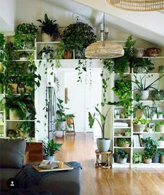Living Room Decoration With Plants Ideas You'll Like; Living Room Decoration With Plants; Plants In Living Room; Living Room With Plants Deocr; House Plants Decor, Indoor Plant Decor, Wall Of Plants Indoor, Indoor Plant Shelves, Plant Wall Decor, Indoor Water Garden, Home And Deco, Room Inspiration, House Design