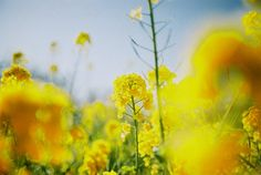 Lomography, Saturated Color, Amazing Photography, Utah, Bloom, Film, Yellow, Plants, Painting
