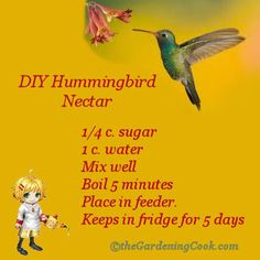 DIY Humming bird Nectar - The Gardening Cook