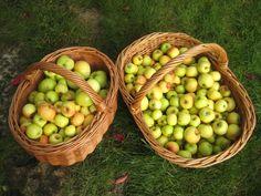 Apples, apples, too many apples in the Saaremaa garden! Apples, Fruit, Garden, Food, Garten, Meal, The Fruit, Gardening, Eten
