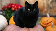 Cat Pumpkins Instructions for cute black cat pumpkins.