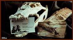 Business cards photographed with real crocodile skull.  #olbedesign #businesscard