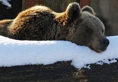 Winter bear.