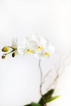 050 Flowers   White